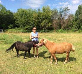 Feeding mini horses.
